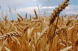 Samenwerking graanverwerkers Meneba en Codrico Rotterdam